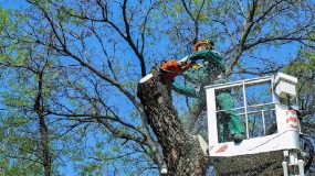 manhattan tree removal 347-956-4342